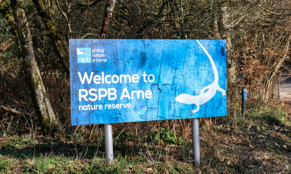 Blue and white Welcome to RSPB Arne sign at entrance to the reserve