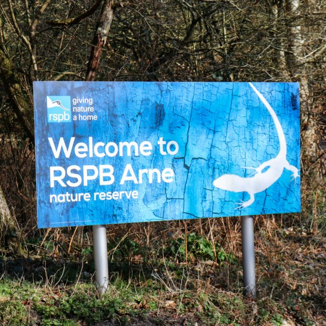 RSPB Arne Nature Reserve